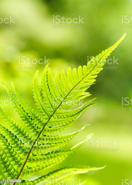 Photo of Beautiful green fern leaves foliage in the forest.