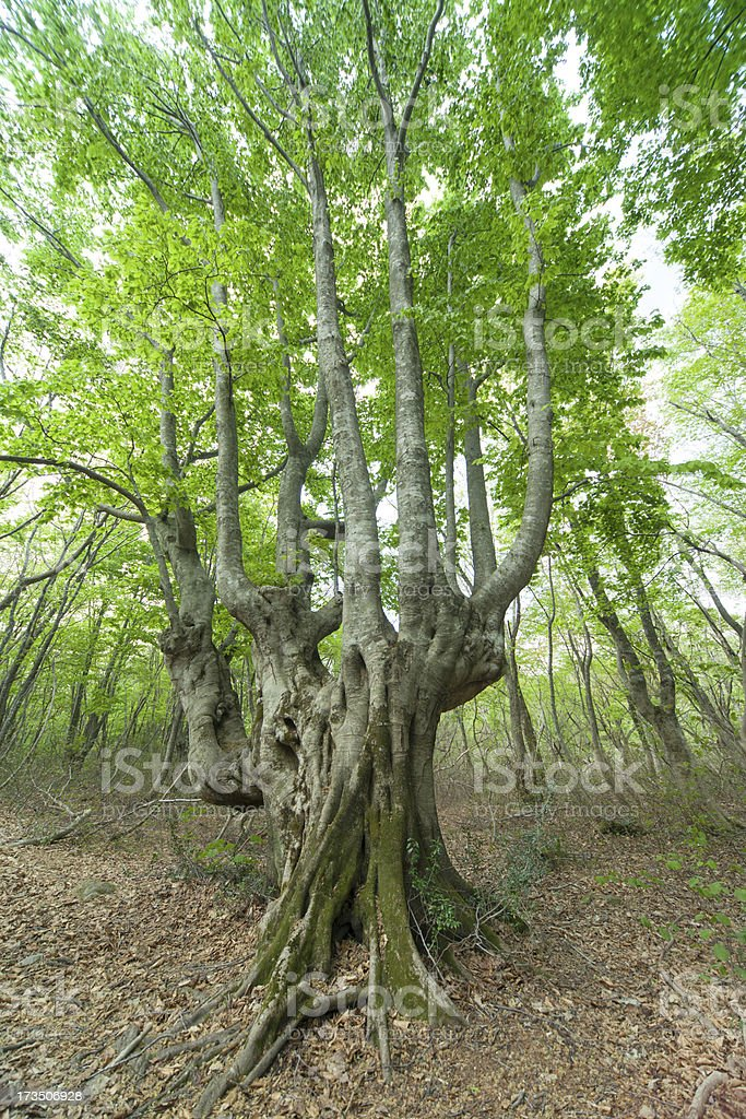 Beautiful green forest in early summer. royalty-free stock photo