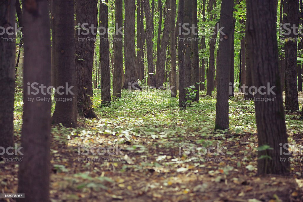 beautiful green forest royalty-free stock photo