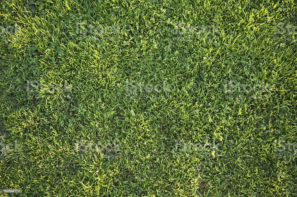 Beautiful Green Grass Background Texture royalty-free stock photo