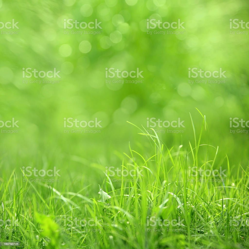beautiful  green grass detail royalty-free stock photo