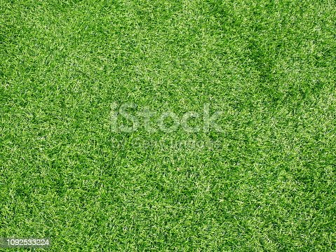 Lawn, Meadow, Field, Forest, Front or Back Yard