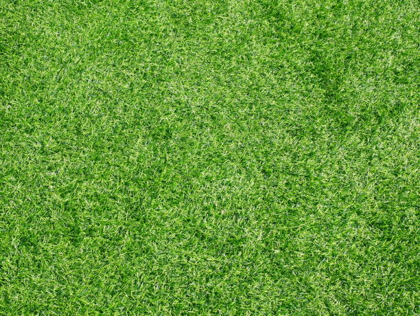 Beautiful green grass pattern from golf course Lawn, Meadow, Field, Forest, Front or Back Yard grass area stock pictures, royalty-free photos & images