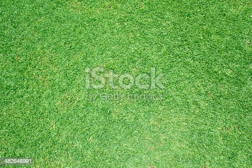 825397576 istock photo Beautiful green grass pattern from golf course 482646991