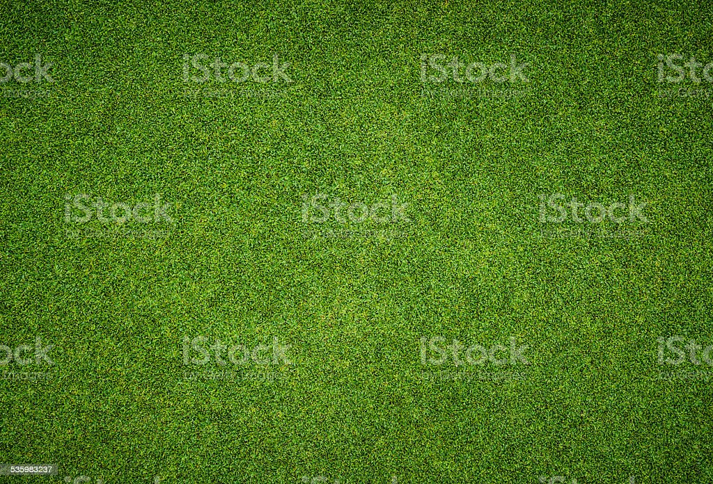 Beautiful green grass pattern from golf course