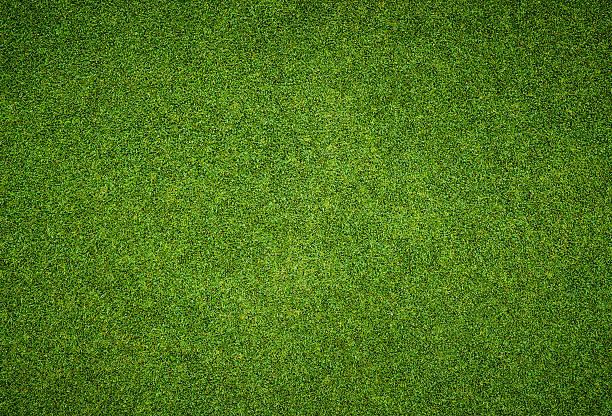 lindo padrão de grama verde do campo de golfe - gramado terra cultivada - fotografias e filmes do acervo