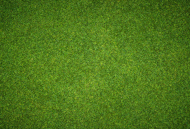beautiful green grass pattern from golf course - terras veld stockfoto's en -beelden
