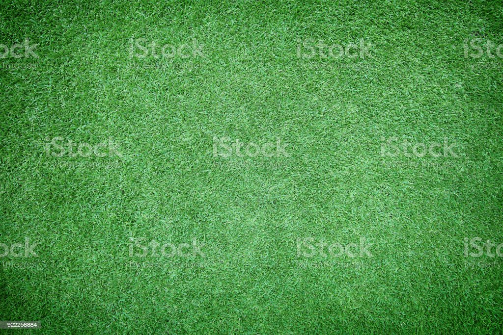 Beautiful Green Grass Texture Stock Photo - Download Image Now - iStock