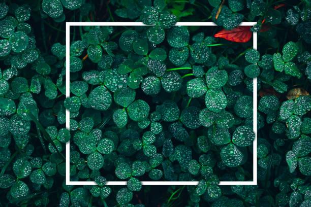 schönen grünen rasen mit glitzernden regentropfen und einem roten blatt in dem dunklen hintergrund. - tropfenblatt tisch stock-fotos und bilder