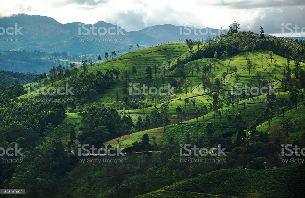 Beautiful Green Landscape Of The Hill Country Sri Lanka Stock Photo Download Image Now Istock