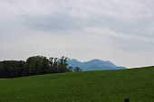 Beautiful green landscape with trees and grass and gray sky in background