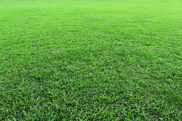 Beautiful green lawn Natural texture grass area stock pictures, royalty-free photos & images
