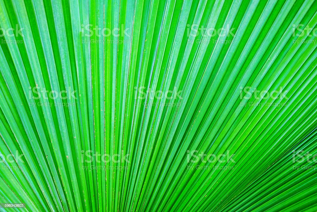 Beautiful green leaf as background royalty-free stock photo
