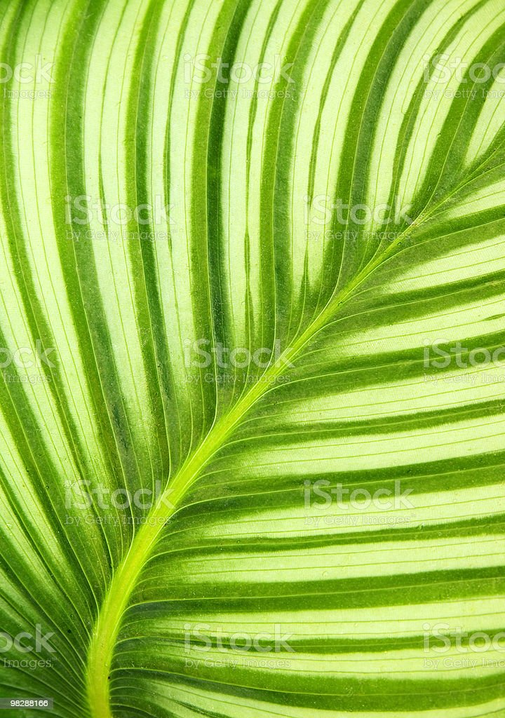 Beautiful green leaf background royalty-free stock photo