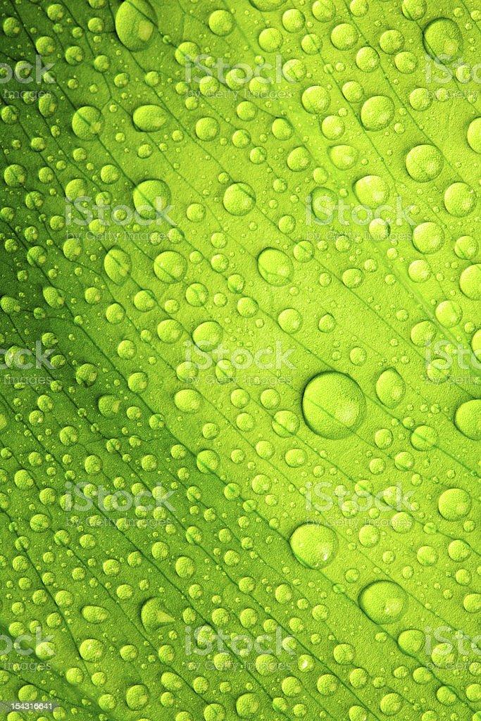 Beautiful green leaf stock photo