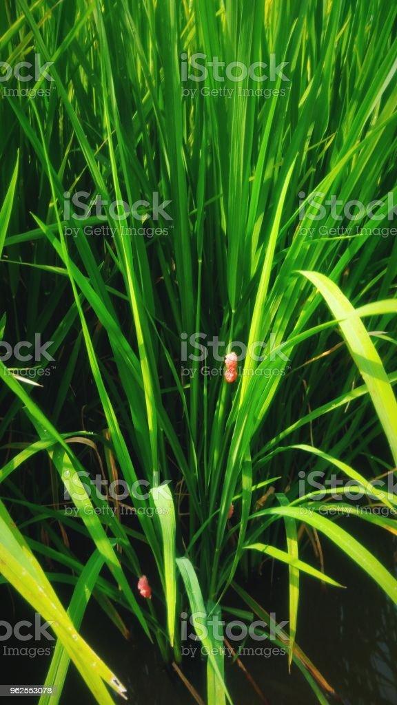 Linda folha Verde - Foto de stock de Beleza natural - Natureza royalty-free