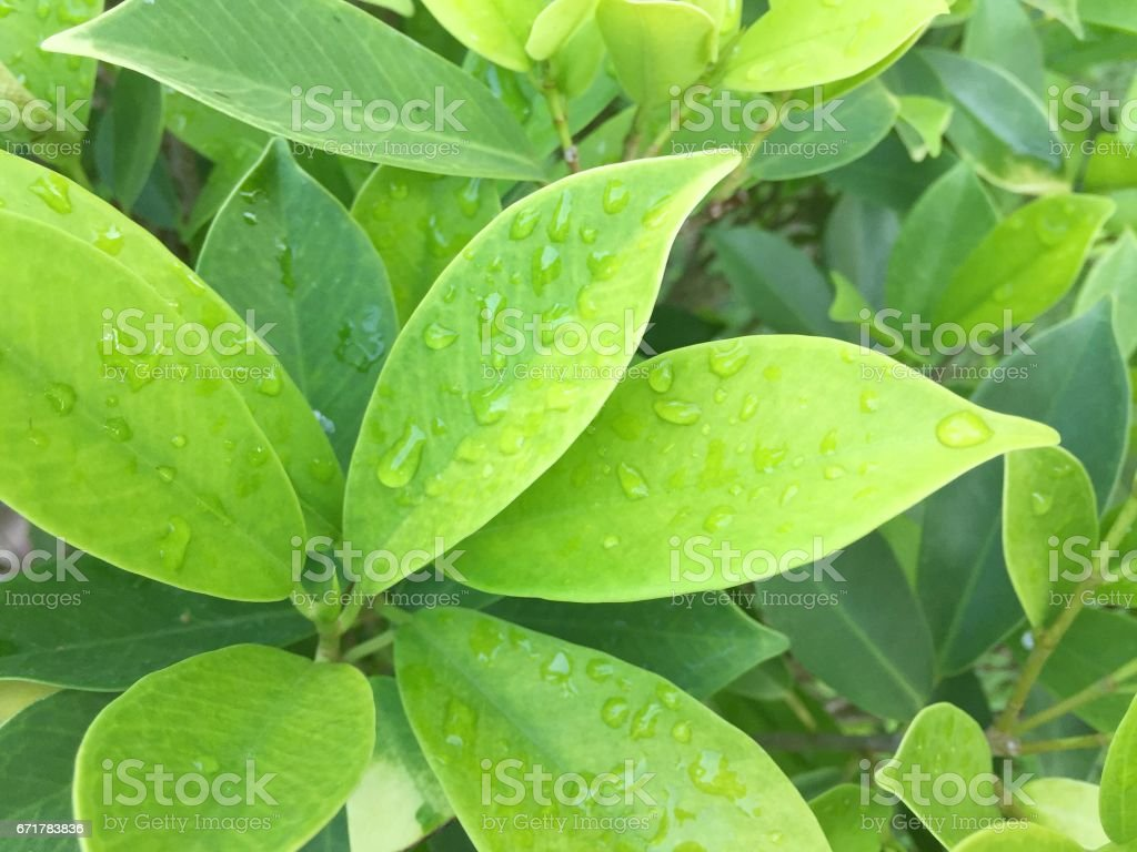 Beautiful green leaf with drops of water background stock photo