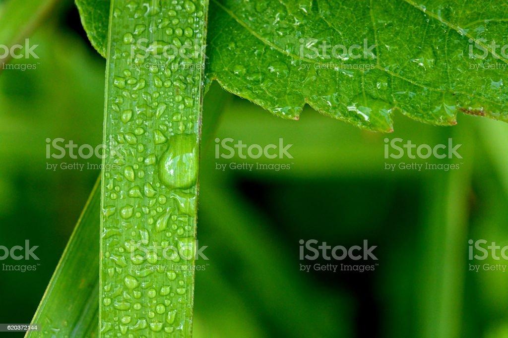 Piękny zielony liść z kropli wody  zbiór zdjęć royalty-free