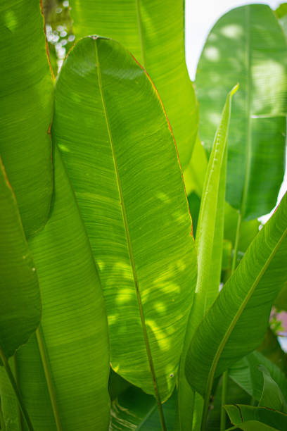 beautiful green Leaves background stock photo