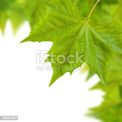 Beautiful Green Leaves In Spring Isolated On White Stock Photo & More Pictures of Autumn