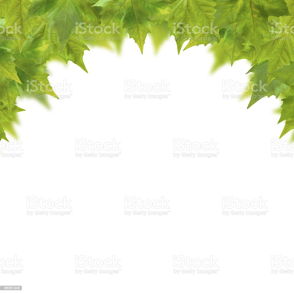 Beautiful green leaves in spring isolated on white royalty-free stock photo