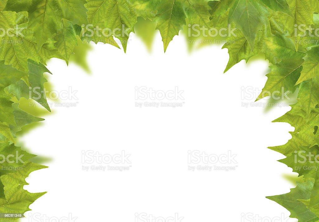 Belle foglie verdi in primavera isolato su bianco foto stock royalty-free