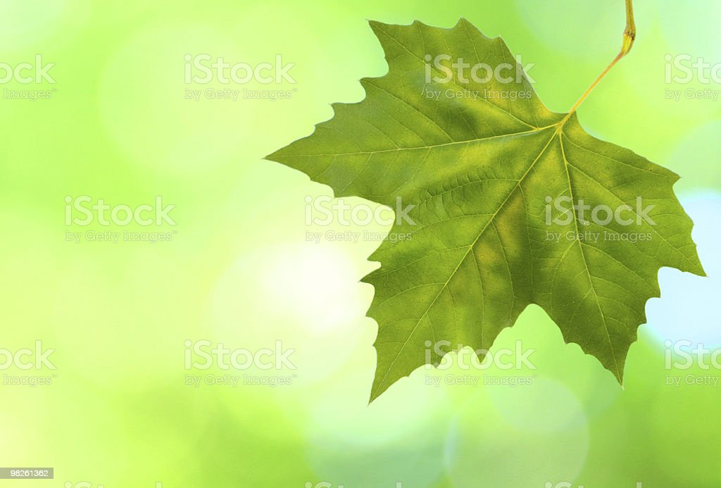 Beautiful green leaves with green background in spring royalty-free stock photo