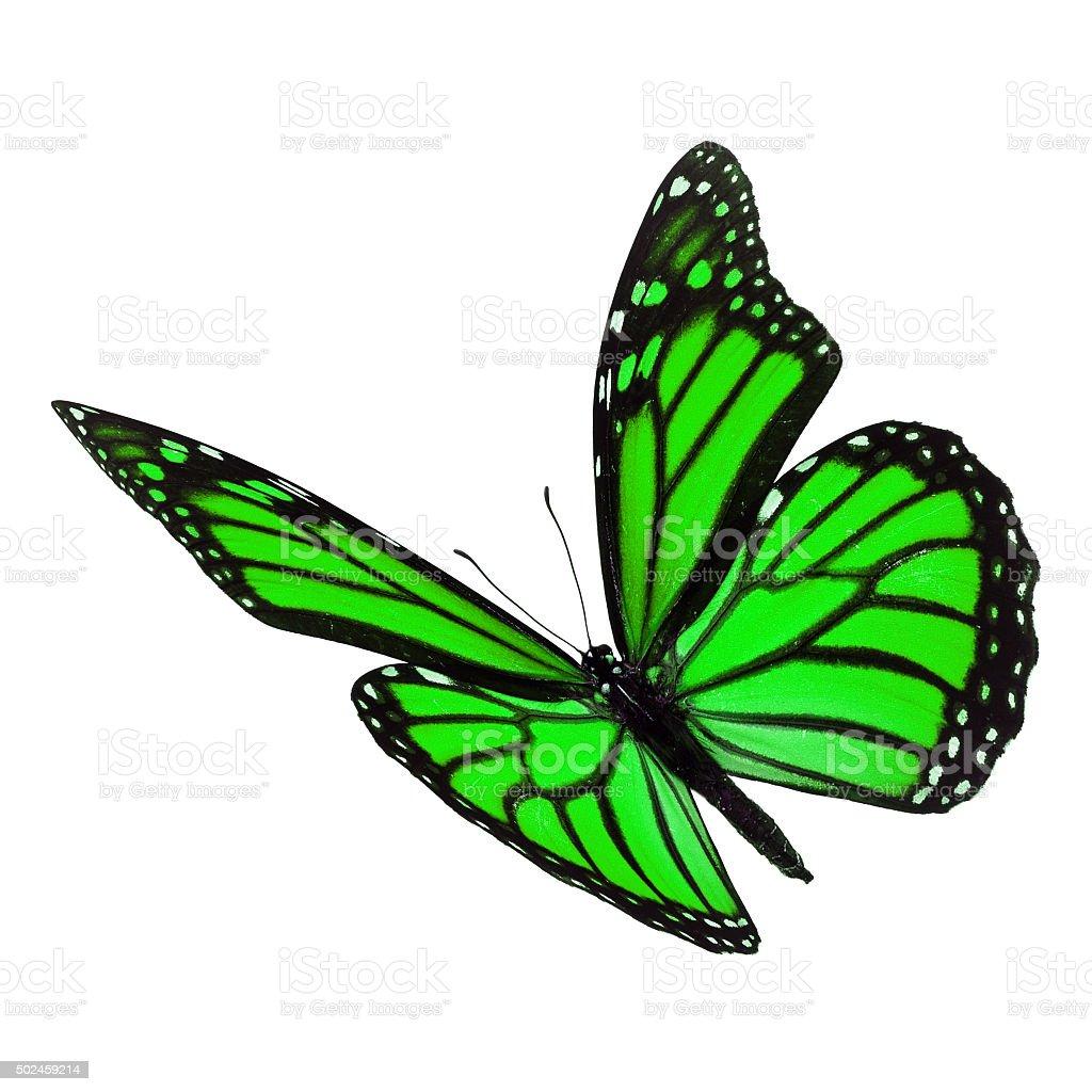 Fotografía de Hermosa Mariposa Monarca Verde y más banco de imágenes ...