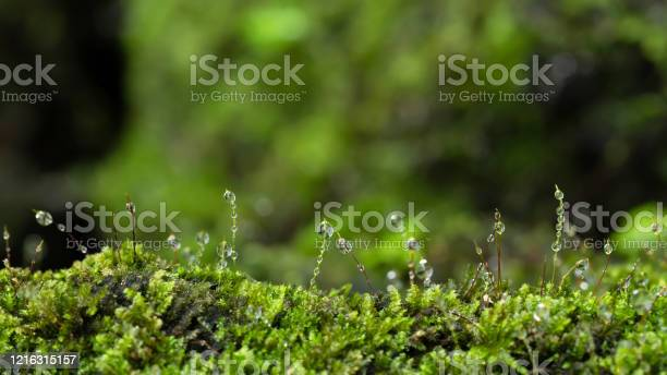 Photo of Beautiful green moss on the floor at the mangrove forest