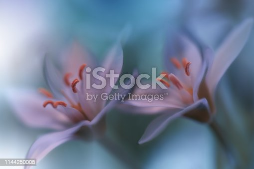Nature,Flowers,Floral,Green,White