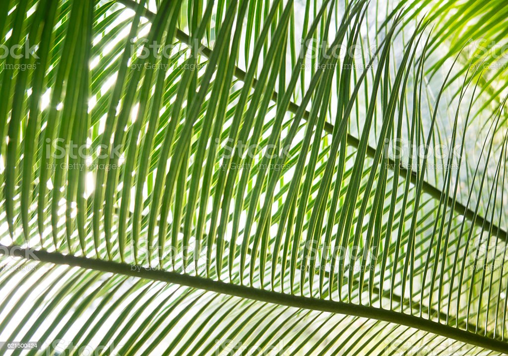 Beautiful Green Palm Leaves photo libre de droits