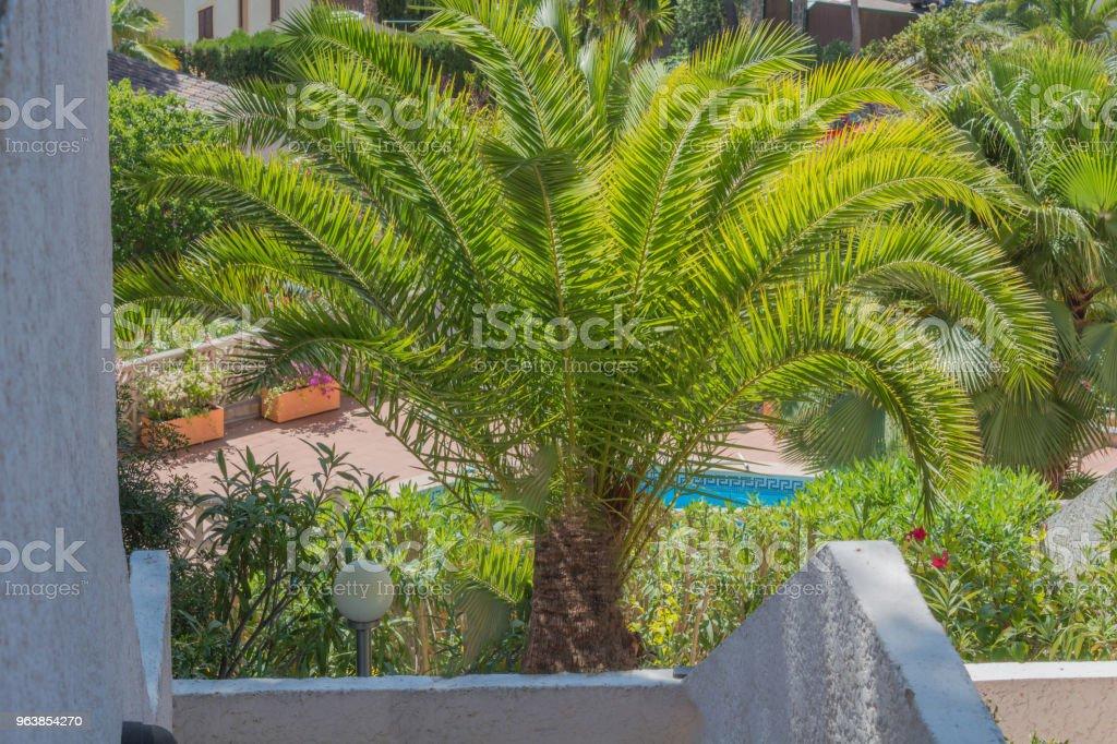 Beautiful green palm - Royalty-free Architecture Stock Photo