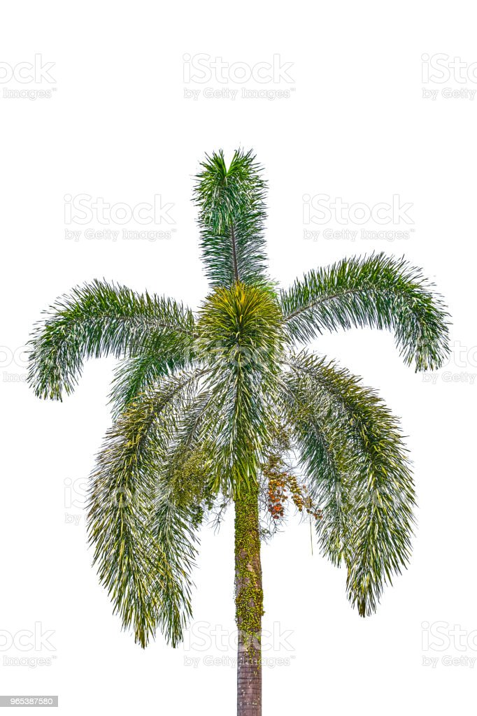 Beautiful green palm view on blue sky zbiór zdjęć royalty-free