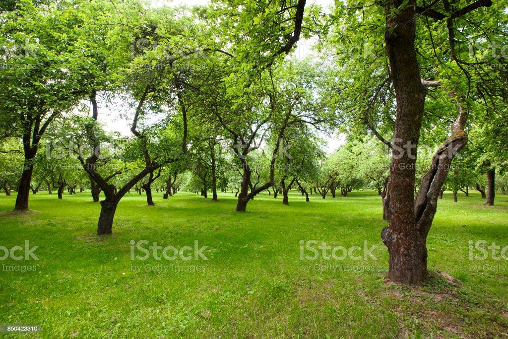 Beautiful green park. stock photo