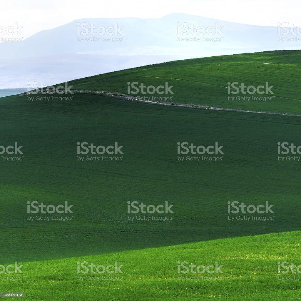 beautiful green royalty-free stock photo