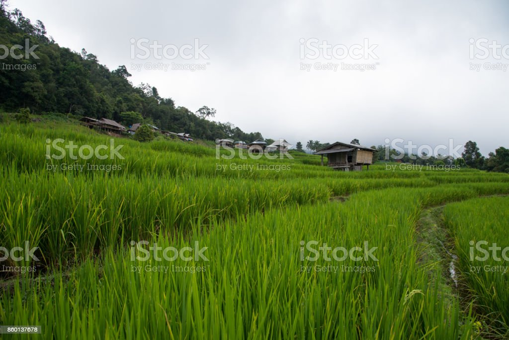 Beautiful green rice fields on terraces in Thailand at Ban Pa Pong Pieng in Mae chaem, Chaing Mai. stock photo