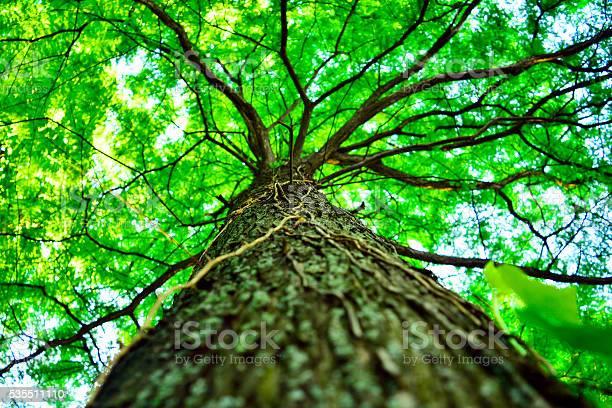 Photo of beautiful green tree, seen from below