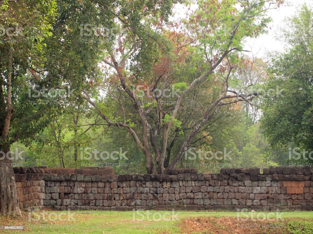 Beautiful green tree with a old Stone wall royalty-free stock photo
