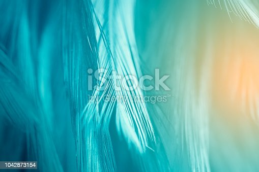 istock Beautiful green turquoise vintage color trends feather texture background with orange light 1042873154