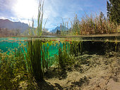 Half under water and half above technique used; Green Water Spring of Zelenci near Kranjska Gora, Slovenia, Europe. GoPRO 7 + SPLIT dome port.