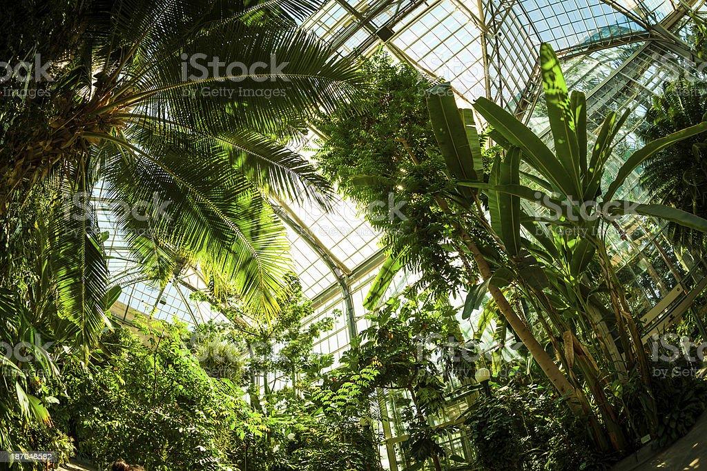 Beautiful Greenhouse Tropical Garden stock photo