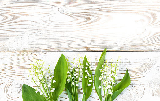 bouquets of lilies of the valley on white paint rustic wooden background. Space for text, flat lay