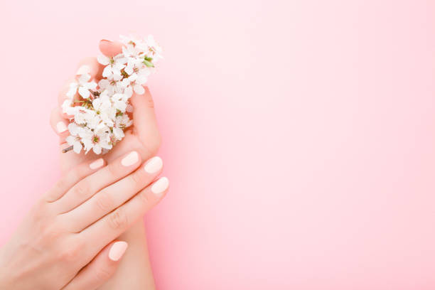 Beautiful groomed woman hands with white branch of cherry blossoms on light pink table background. Pastel color. Closeup. Manicure beauty salon concept. Empty place for text or logo. Top down view. stock photo