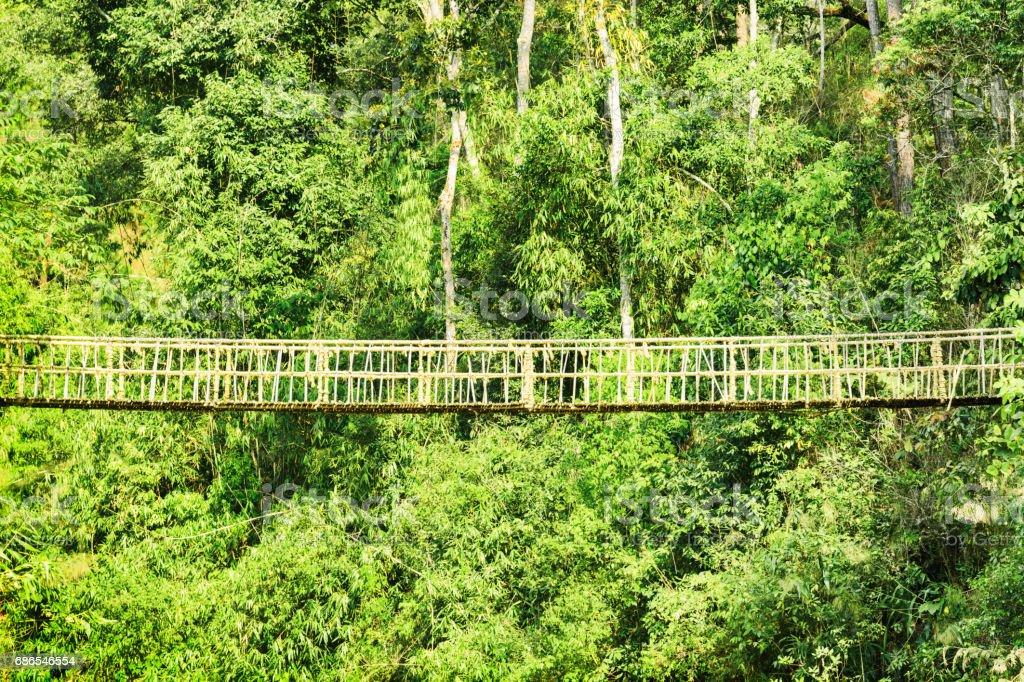 Beautiful hanging bridge among green woods foto stock royalty-free