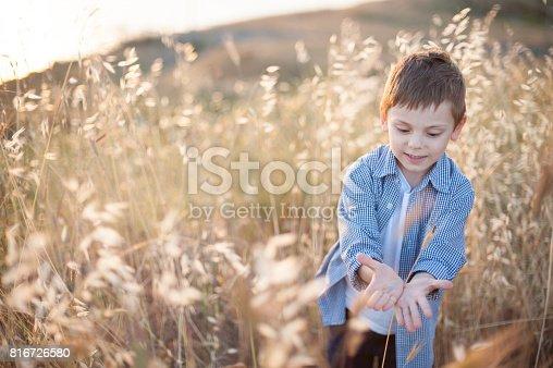 istock Beautiful happy little boy in a shirt among the cornfields 816726580