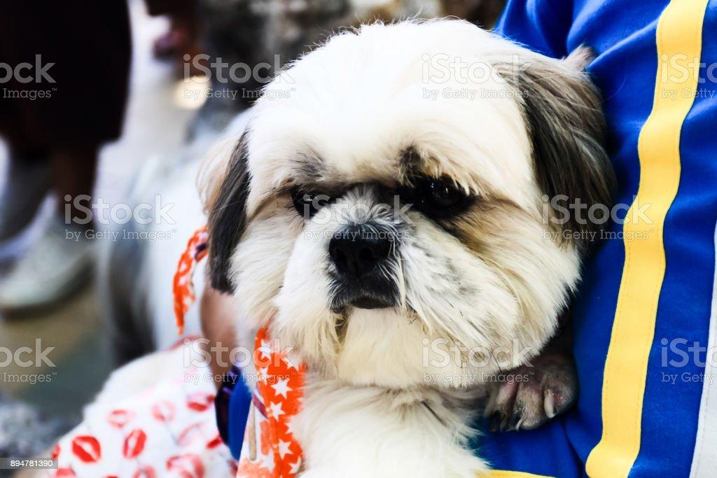 Beautiful happy puppy dog stock photo