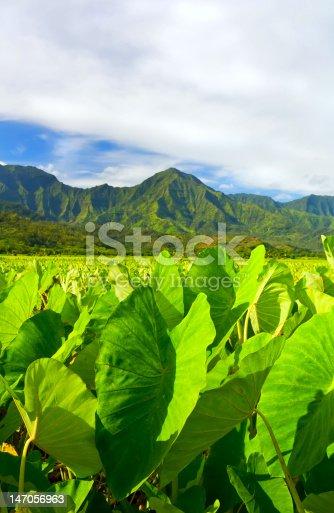 istock Beautiful Hawaiian Landscape 147056963