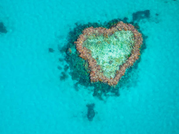 beautiful heart reef in the great barrier reef, australia. - great barrier reef stock pictures, royalty-free photos & images