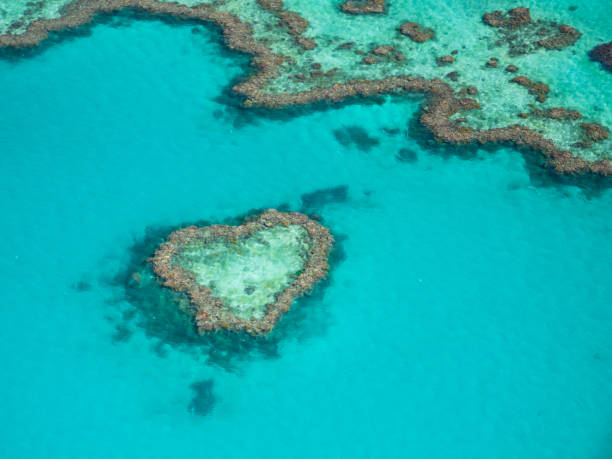 beautiful heart reef in the great barrier reef, australia. - great barrier reef marine park stock pictures, royalty-free photos & images