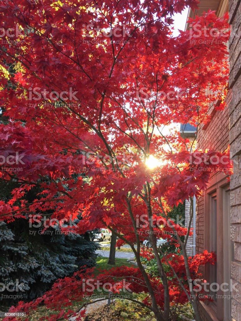 Beautiful Home in Fall stock photo